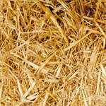 Casamento: um campo a semear (parte 04)
