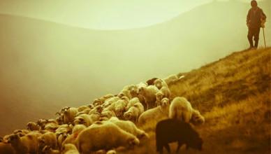 Quem é o pastor?
