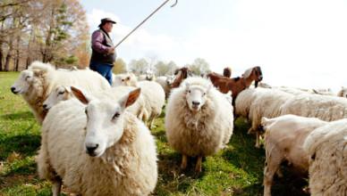 pastores de si mesmos
