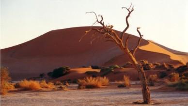 manhã no deserto