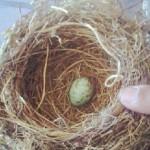 A trajetória de um ovo azul