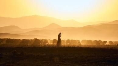por que pastores se matam?